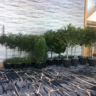 Little Eden Plantscaping
